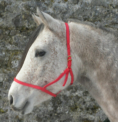 underhalter in softweave web by Plas Equestrian. Lots of colours. All sizes
