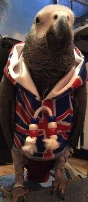 Hoodie UNION JACK  Babes in the Hood parrot Hoodie mega cute Easy on
