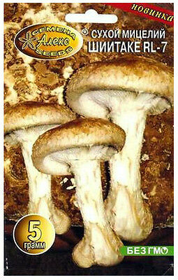 SHIITAKE RL 7 Japanese Mushroom Hoang Mo Oriental Black Oak Glossagyne SPAWN