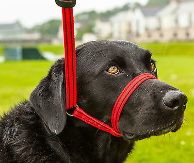 Gencon All in One, Dog Headcollar and Lead all in one-BLACK