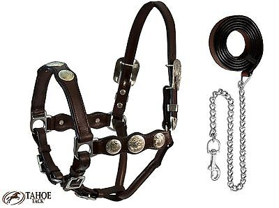 Tahoe Silverado Series Leather Round Concho Show Halter with Lead