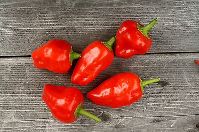 Spicy Acres Red Scotch Bonnet Pepper Seeds Organic Non-GMO