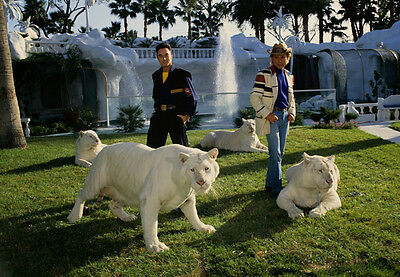 Art print POSTER Siegfried and Roy with White Tigers