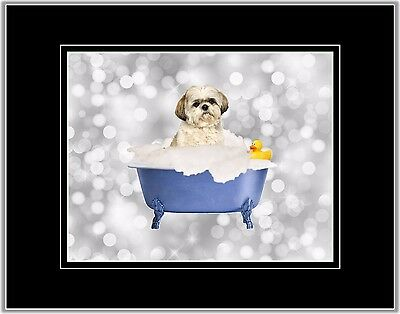 Blue Gray Dog Photo Art Shih Tzu Wall Decor Picture Matted Bathroom Print