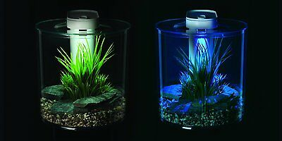 Fish Desktop Aquarium 10L Countertop Tank Inbuilt Filter LED Lighting