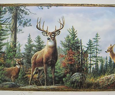 DEER BUCK DOE in the WOODS HUNTING Wallpaper Border 8""