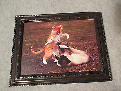 "FRAMED Glass @6X4"" Wall Desk BLACK Battle 2 KITTENS Photographic Picture SM CAT"