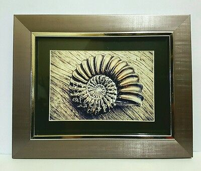 Framed Original Photo of Fossil Ammonite - science, palaeontolgy, museum & art