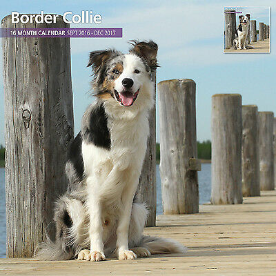 Border Collie - 2017 16 Month Traditional Wall Calendar