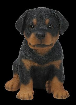 New Pet Pals Rottweiler Puppy Ornament By Vivid Arts