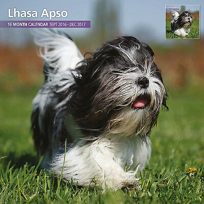 Lhasa Apso - 2017 16 Month Traditional Wall Calendar