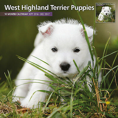 West Highland White Terrier Puppies - 2017 16 Month Traditional Wall Calendar