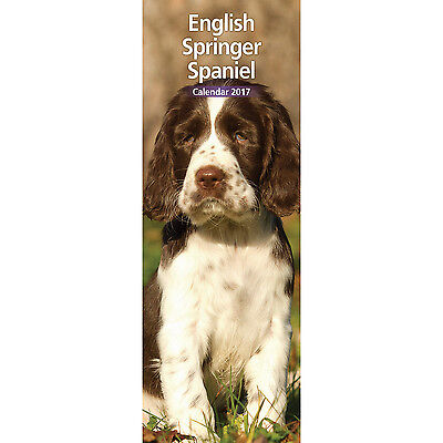 English Springer Spaniel - 2017 Slim Calendar