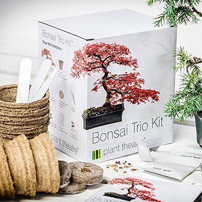 Plant Theatre Bonsai Tree Trio Kit Grow Your Own Seed Japanese Chinese Growing