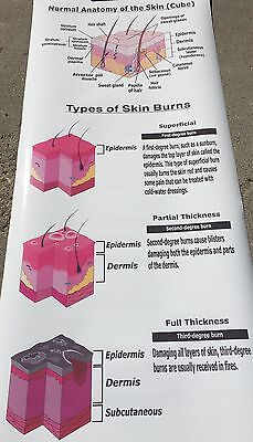 Human Body Anatomy Of The Skin Types Of Burns Anatomical Medical Poster