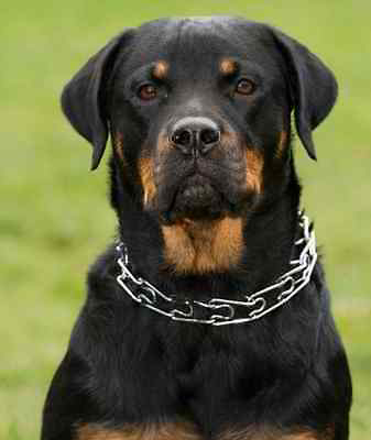 Anti Pulling/ Stop Pulling Dog Collar -Metal Chrome Spikes and Chain,
