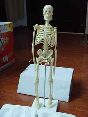 New 45CM Human Anatomical Anatomy Skeleton Fexible
