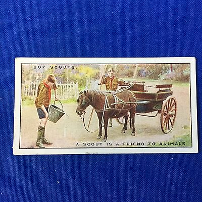 Boy Scout Tobacco Trading Card A Scout Is A Friend To Animals