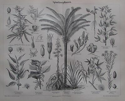 1889 SPINNFASERPFLANZEN Original alter Druck antique print Lithographie