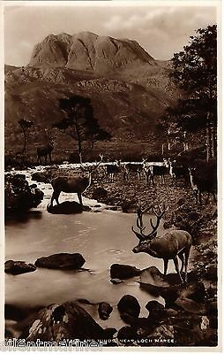 Loch Maree, Stags and Hinds, sepia RP postcard, unposted