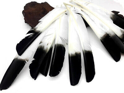 1/4 Lb - Black Tipped Turkey Pointers Imitation Eagle Wing Wholesale Feather