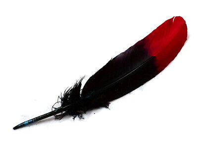 6 Pieces - Red & Black Two Tone Turkey Round Tom Wing Secondary Quill Feathers