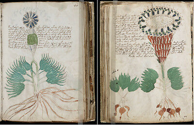 The Mysterious Voynich Manuscript Cipher, Cryptography, Unsolved Code On Dvd