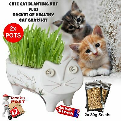 Pet Treats Fresh Cat Grass Seeds Organic Pesticide Free Healthy Antioxidant