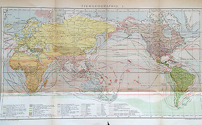 1897 TIERGEOGRAPHIE I. II. alte Landkarte antique map Lithographie