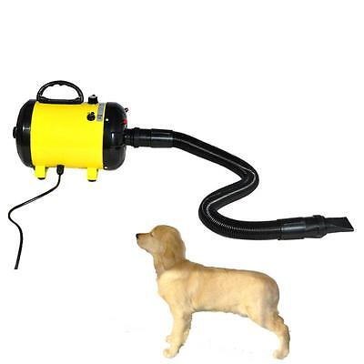 Portable Dog Cat Pet Grooming Hair Dryer Pet Hairdryer Machine 220V 2400W