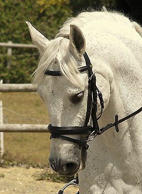 Rhinegold German Leather Bridle With Flash Noseband Fully Padded Wider Style