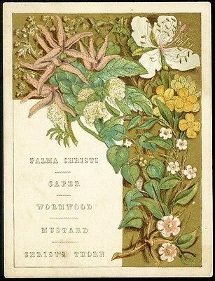 PLANTS Religious Meanings Victorian Card - MUSTAND Wormwood CAPER Palma Christi