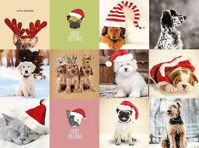Dog and Cat Christmas Cards