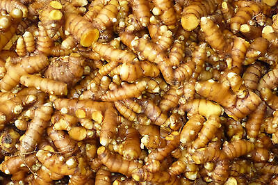 Turmeric Rhizome Root Fresh Naturally Organically Grown 1kg