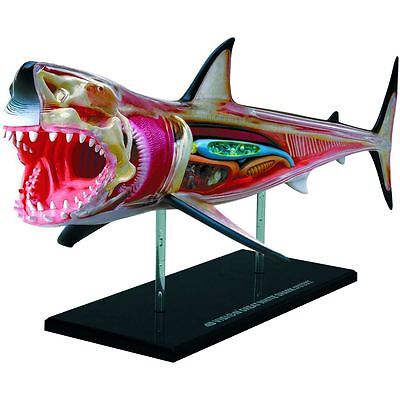 Thames & Kosmos 4D Vision Great White Shark Anatomy Model Science Kids 8+ Toy
