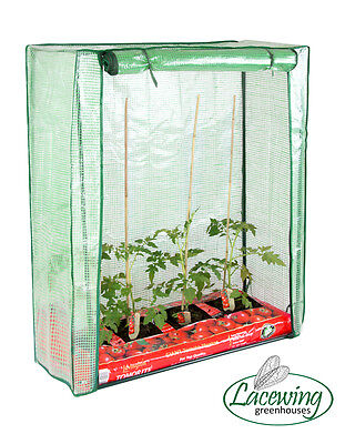 Lacewing 112cm x 94cm Reinforced Tomato Greenhouse Mini Cold Frame Growhouse