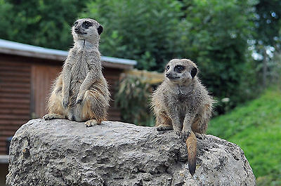 Dudley Zoo Admit 2 People For The Price Of 1 Voucher Valid 31-12-16 Midlands Zoo