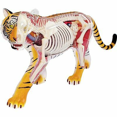 Thames & Kosmos 4D Vision Tiger Anatomy Model Science Nature Childrens 8+ Toy