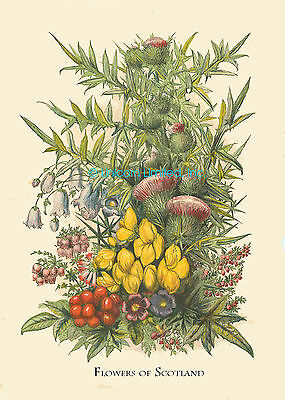 Lovely FLOWERS OF SCOTLAND PRINT - Repro of Victorian Original - Ready to Frame