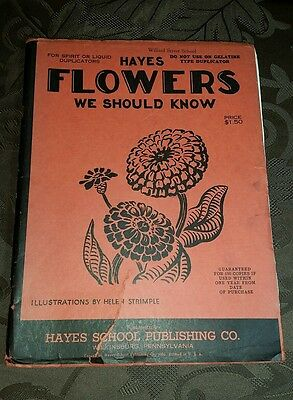 VTG Hayes FLOWERS We Should Know Picture Duplicator pages Book Helen Strimple