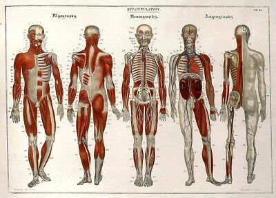 19th Century Anatomical Print Recapitulation By Jean Baptiste Sarlandier
