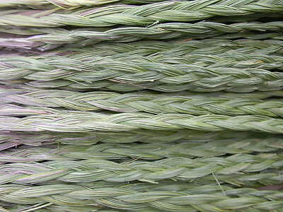 50 Sweetgrass braids  24+ inches