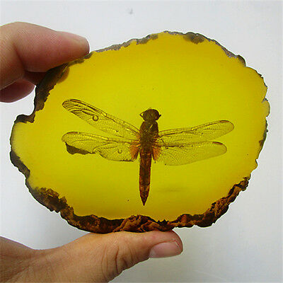 Beautiful Amber Insect  Inside Dragonfly