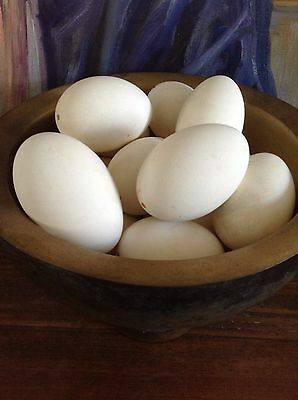 Beautiful White Blown Goose Eggs