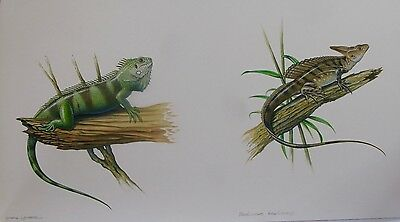 Original Watercolour of Two Lizards by Natural History Illustrator