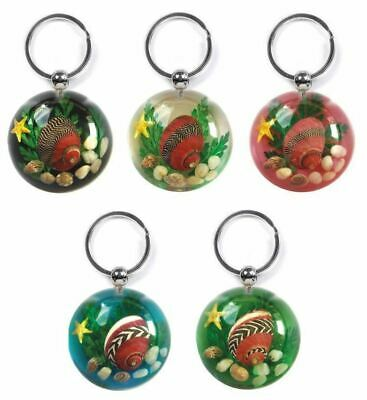 Real Sealife Scene Key Ring/Chain Charm - Red Periwinkle Seashell