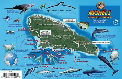 Moheli Comoros Islands Africa Dive Map & Reef Creatures Laminated Fish ID Card
