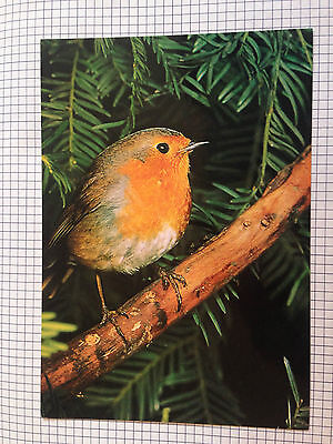 Robin A Salmon Cameracolour Postcard Printed In England