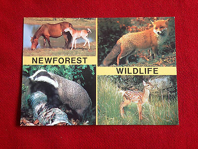 New Forest Wild Life Red Fox Red Deer Badger & Ponies Postcard