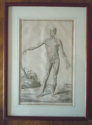 Antique 18th c. French Anatomical Etching/Plate by D.Diderot and D'Alembert